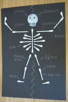 SCIENCE: Silly skeleton ~ an education craft to learn about the human body Human Body Science, Human Body Activities, Human Body Unit, Human Body Systems, Teaching Science, Science For Kids, Science Activities, Science Projects, Skeletal System Activities