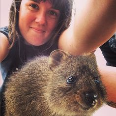 「My phone may be covered in #quokka spit but I think the result speaks for its #quokkaselfie (no quokkas harmed in the making of this picture).」
