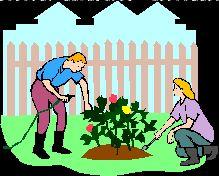 Magia das Plantas: Doencas nas Plantas do Jardim