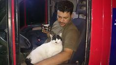#Syria #Cats