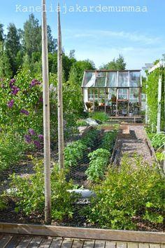 Kanelia ja kardemummaa: kasvihuone  Kesäkuu2012