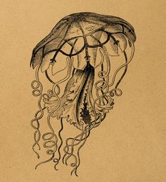Vintage jellyfish illustration 1898 year Digital Image Download Sheet Transfer To Pillows T-Shirt Towels Burlap Bag or Print. Item A0339. $1.00, via Etsy.