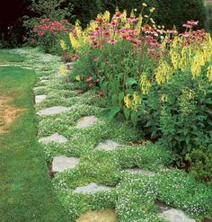 Star-Studded Path - A galaxy of tiny, pale blue stars fills this garden path. This ground cover, Pratia pedunculata, also known as blue star creeper, blooms from late spring through much of summer.