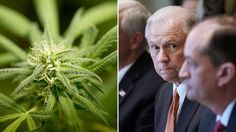 Federal task force reportedly recommends more marijuana study, no crackdown