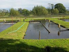 Fish Farming Ponds, Tilapia Fish Farming, Fish Pond Gardens, Sustainable Farming, Sustainable Living, Sustainability, Aquaponics Greenhouse, Aquaponics System, Tropical Aquarium