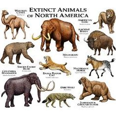 extinct animals -