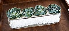 the white rocks glam up these succulents