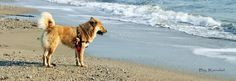 Chanell face a la mer