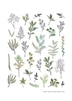 Botanical illustration by Sanny van Loon | plants | herbs | twigs | flora | pattern | watercolor