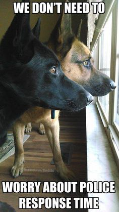 Exactly like in many houses with #german #shepherds