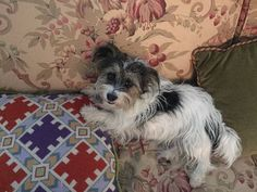 Lost Dog - Jack Russell Terrier in SOUTHAMPTON, NY ShareFacebook Twitter Google+ Email      Pet Name:Lucy (ID# 122359) Gender:Female Breed:Jack Russell Terrier Color:White Color 2:Black Pet Size:Small (10-19lbs) Pet Age:6 yrs old Date Lost:02/06/2016 Zip Code:11968 (SOUTHAMPTON, NY) See All Lost Dogs In SOUTHAMPTON, NY