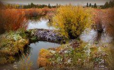 Fall foliage Beaver dam Fine Art Photography by turquoisemoon, $35.00