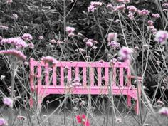 Pink bench color splash ~ by Ladee Pink