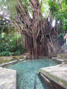Old Enchanted Balete Tree Siquijor Visit If You Dare: The 3 Creepiest Trees In The Philippines