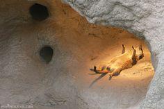 Séance d'UV pour suricate
