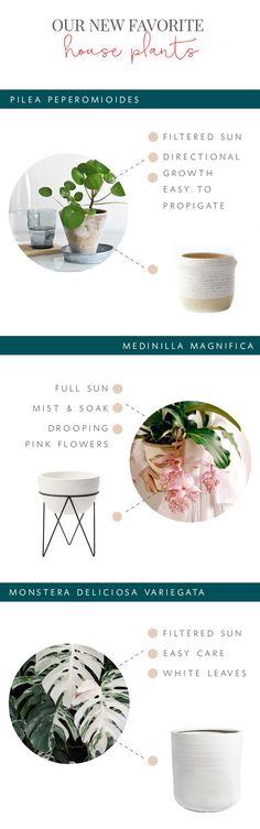 our new favorite house plants and planters to try this spring! | coco kelley