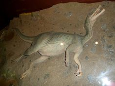 Joel kontinen: What Does the Dinosaurs' Typical Death Position Te...