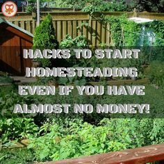 Homesteading is all about self sufficiency, sustainability and lifestyle change. It is about no longer being reliant on service delivery but being resourceful and living off the land and with natur…