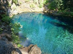"""""""Amazingly clear water along side the Mackenzie River Trail in Oregon."""