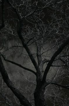 Trees Come Alive at #Night. www.frightkingdom...