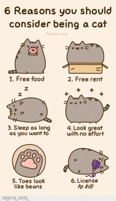 6 reasons you should consider being a cat