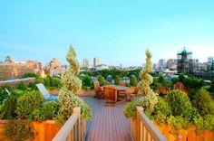 immergrüne Pflanzen Holzkübel Terrasse gestalten