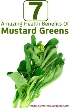 raw mustard greens nutrition, what is mustard greens good for, mustard seeds fried - health benefits, nutritional information mustard greens, mustard leaf benefit, mustard leaves health benefits, benefits of eating collard greens, mustard leaves recipe, Mustard Greens - Health Benefits and Nutrition Facts, Health Benefits of Mustard Greens, Mustard greens nutrition facts and health benefits, Benefits of Mustard Greens,