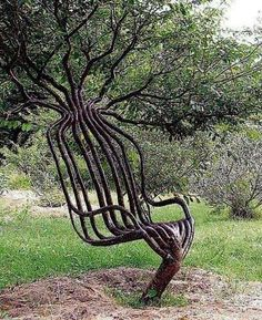 Tree grown into Chair