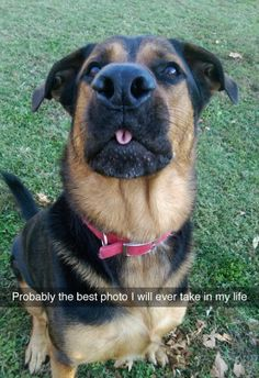 visit www.amazingdogtales.com for the best funny dog joke pics,inspirational dog stories and dog news.... I love this picture!