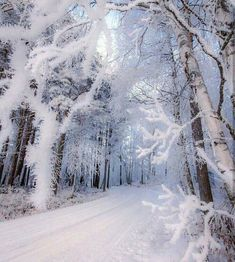 Road through the magical forest ~ Lapua, Finland. Photo by – All Pictures Winter Scenery, Winter Trees, Winter Magic, Winter Fairy, Magical Forest, Snow Forest, Forest Road, Snow Scenes, Winter Pictures