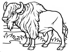bison bison coloring page