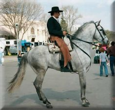 The Andalusian is descended from the Barb horse from the North West African deserts and the Sorraia, a primitive breed of rare horse from Spain.