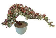 Jadeite     Bonsai Tree