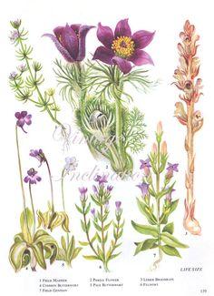 WILD FLOWERS Vintage Botanical Print Antique, purple plant print 139 botanical print, bookplate art print, herb plants plant wall print