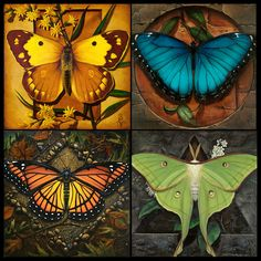 """This is a collection of four prints that are sold as one unit. Produced in a signed and numbered limited edition of 50 sets, this series of reproductions is based off of four original paintings called """"The Four Elements"""". The series depicts several butterflies and a moth painted to reflect """"Sky"""", """"Sun"""", """"Earth"""" and """"Moon"""". Printed on 14"""" x 14"""" museum quality cotton canvas, the edition of 50 prints is produced using archival Epson pigments rated to resist fading for 200 years. Small Paintings, Large Painting, Animal Paintings, Figure Painting, Original Artwork, Original Paintings, Equine Art, Disney Drawings, Epson"""