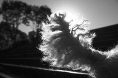Dog tail and sunshine