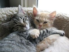What Are You Looking At Hug | The 25 Most Important Kitten Hugging Techniques