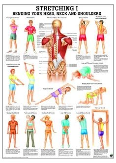 benefits of pilates Neck and Shoulder Stretching Poster Body Pilates, Pilates Workout, Pilates Video, Pilates For Beginners, Running For Beginners, Stretching Exercises, Stretches, Golf Exercises, Yoga Inspiration