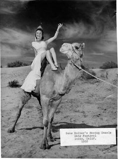 Gene Holder's Racing Camel - Indio, CA Date Festival 1958