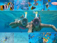 Highlights of Bora Bora – The Girls Who Wander Bora Bora, Tahiti, The Girl Who, Wander, Highlights, Fish, Pets, Girls, Animals