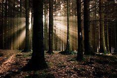 Near Coo, Stavelot, Ardennes, Belgium by Dieter Orens