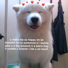 i love you Love You Meme, Cute Love Memes, Cute I Love You, Stupid Memes, Funny Memes, Bf Memes, Flirty Memes, Wholesome Pictures, Couple Memes