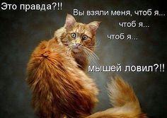 http://ok.ru/