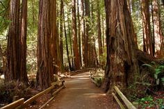 Redwood National Forest, Northern California