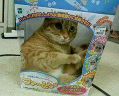 15036_535741346453397_1404239557_n.png (480×392)猫