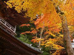永源寺:山門と紅葉