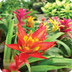 Bromeliads are great plants for semi-sun locations and are low maintenance.