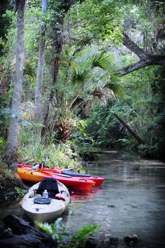 Kayaking on the Chassahowitzka River in Citrus County, Florida.