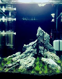 A nice start! headfangs: so long as we're on the topic of my horrifying obsessive nature… ok so a while ago I said aquascaping was my new obsession and I wasn't lying… waiting for my hairgrass to carpet while I cycle…