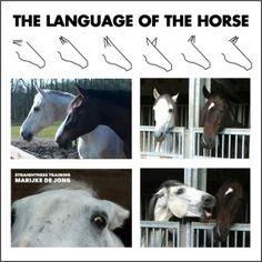 language-if-the-horse
